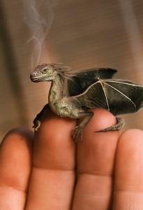 baby-dragon1