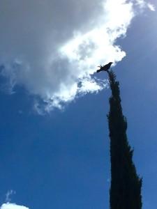 Raven cypress-min